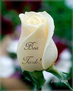 msg boa tarde com flores lindas