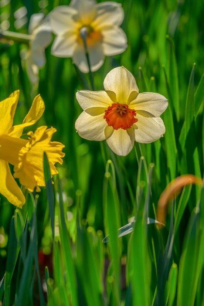 imagens de flores 1