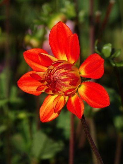 imagens de flores 7