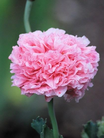 imagens de flores 16