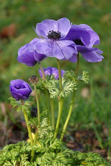 imagens de flores 26