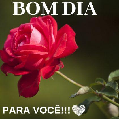 bom dia com rosas vermelhas