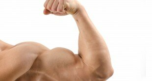 Résultats de recherche d'images pour «muscle allié»