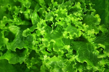 leafy greens for weight loss