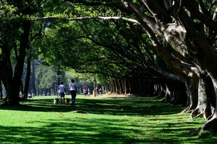 São Paulo Travel Guide: Ibirapuera Park