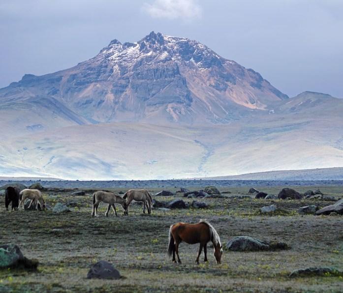 Wild horses on a plain below the Cotopaxi volcano in Cotopaxi National Park, Ecuador