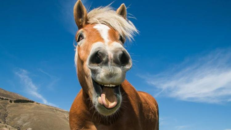 Why You Should Give Your Horse CBD Oil