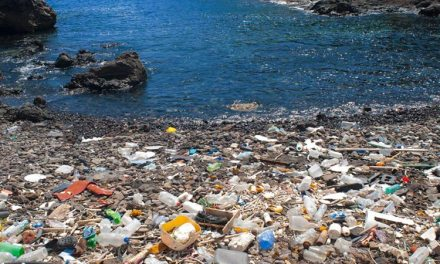 Plastic Bottle – Stop Drinking Your Plastic