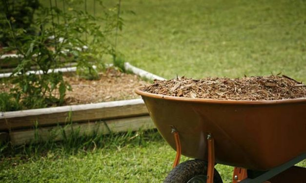 Beginner's Guide – How To Choose The Right Mulching Blades