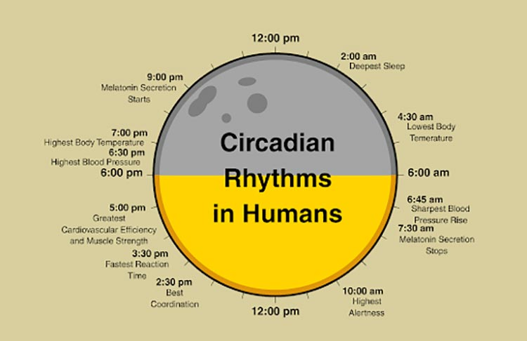 What You Need to Know About Circadian Rhythm