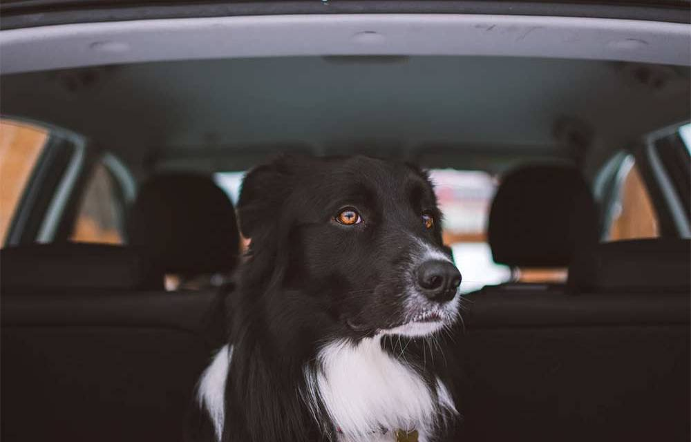 Ways to Keep Your Car Clean After a Doggie Beach Trip