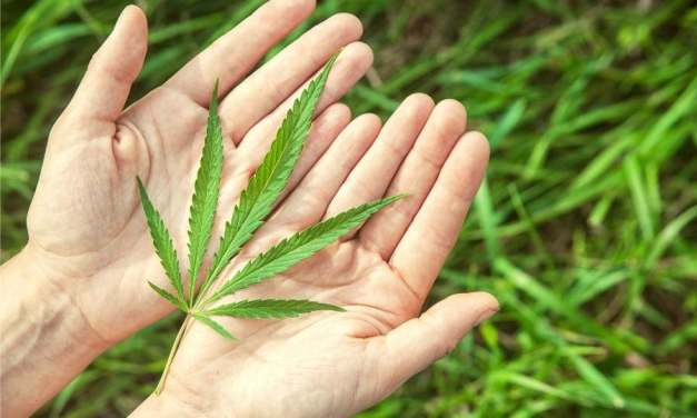 Can You Consume Cannabis Before Exercise?