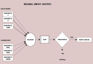 Figure 17.2 Neuron, dendrite inputs and potential axon output