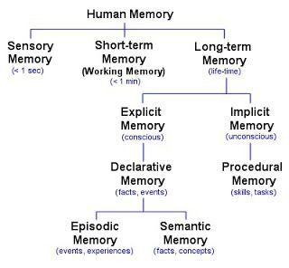 Memory Types. Sensory, Short-term, Long-term. More in text