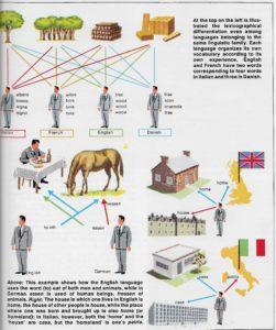 Figure 5.6 Language categorization of reality