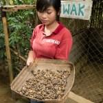 Ja, das ist A-A. Vom Luwak. Diesem katzenartigen Tier, das Kaffeebohnen isst und wieder auskackt. Und das ist dann eine Spezialität.