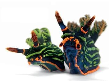 17 nudibranchi Mente Digitale