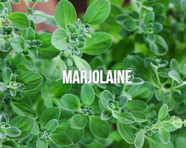 Huile essentielle de Marjolaine