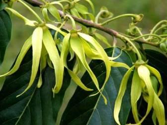 huiles essentielles de Madagascar