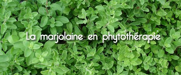 La marjolaine en phytothérapie