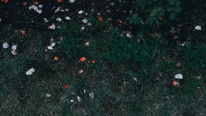 'Al mio sorriso divino non penserai': La logica del merito di Sofia Fiorini
