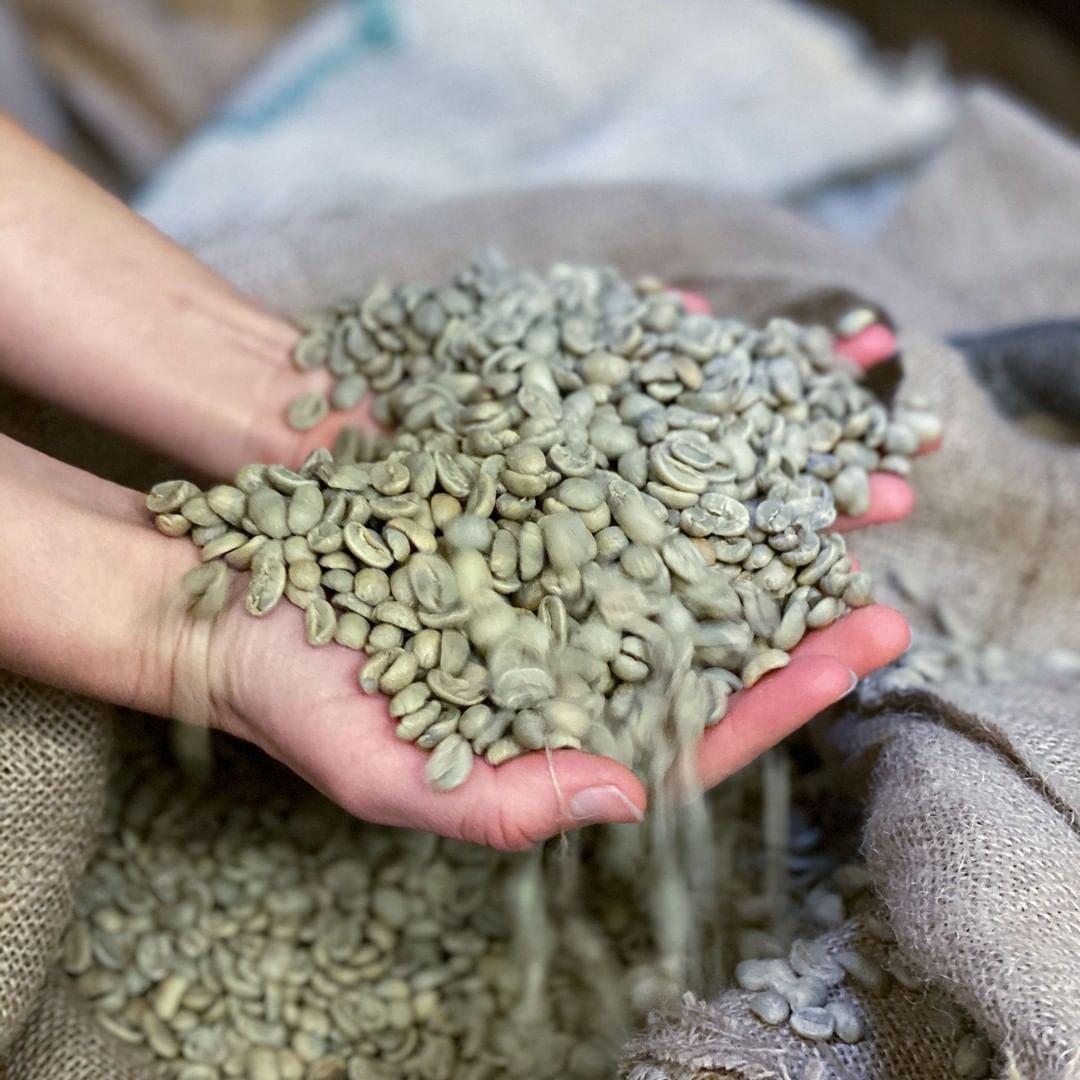 Des grains de café vert