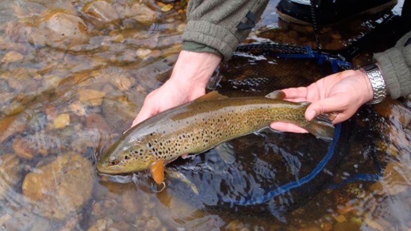 Pesca sin Muerte y su gestión