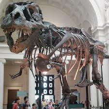 fosil bilim