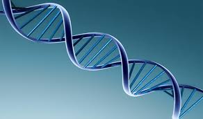 genetik tanı