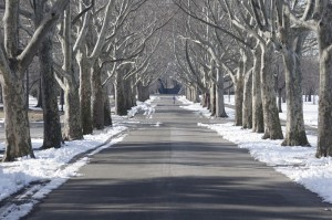 tree-lined-1476635_1280