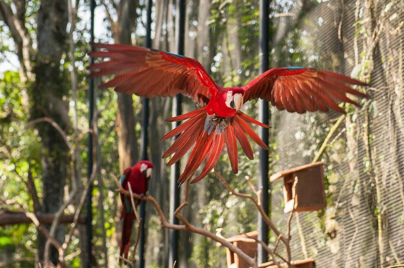 Visitantes poderão observar as aves em seu habitat natural