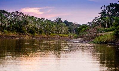 """Amazon gana juicio a Perú por dominio """".amazon"""""""