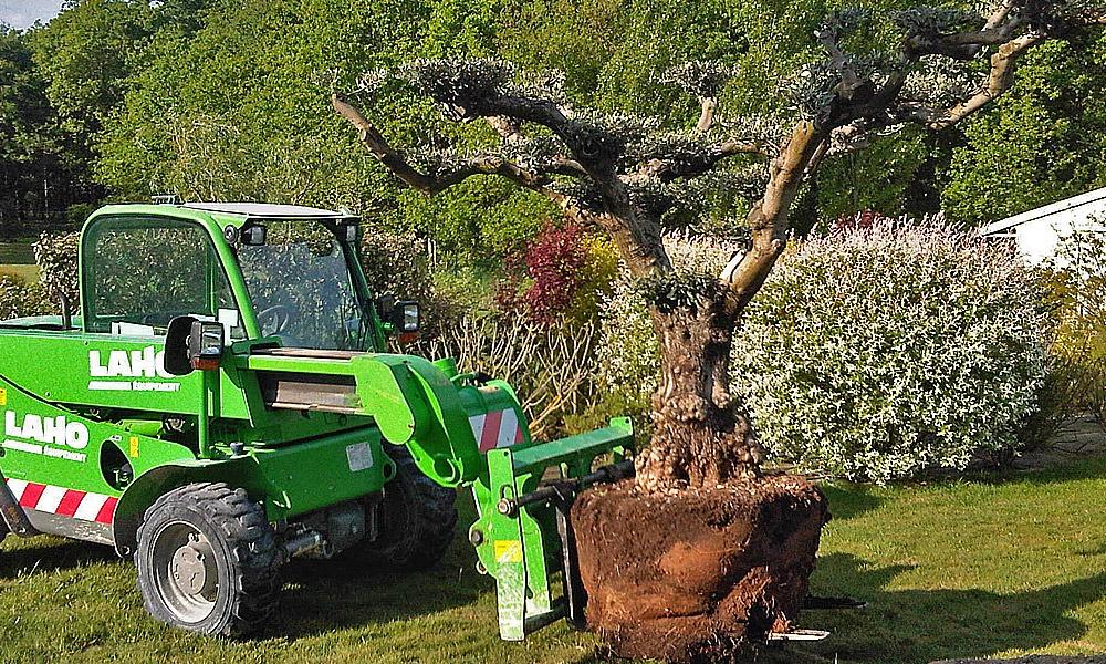 plantation-arbre
