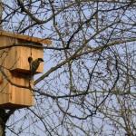 nichoir-oiseaux