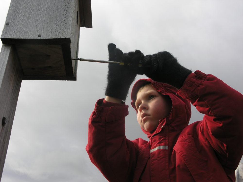 child building birdhouse vermont