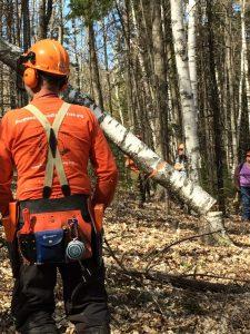 vermont logging