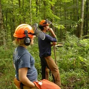 vermont stewards forest