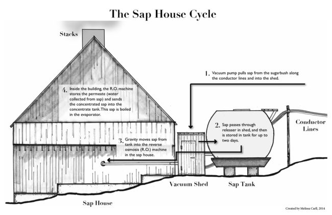 sugar, how it's made, sap house, process