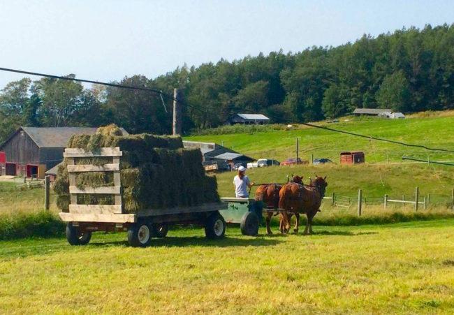 Hay wagon team