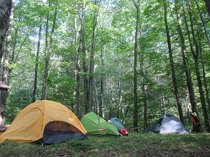 vermont camping forest