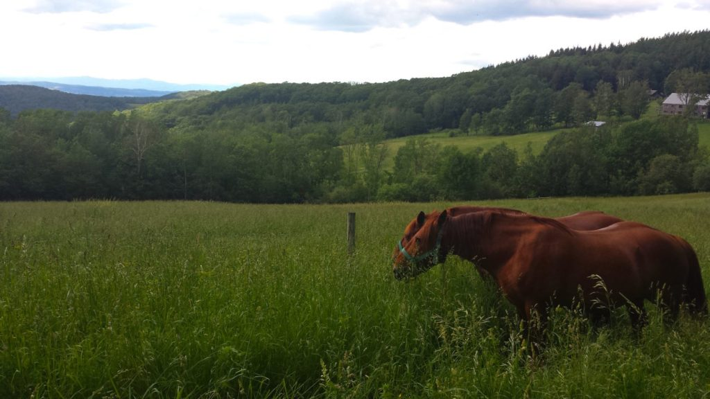 horses, animal products, farm, Vermont