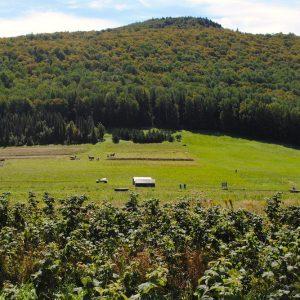 vermont field