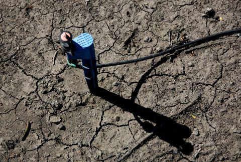 In this photo taken Friday March 27, 2015, low-flow water emitter sits on some of the dry, cracked ground of farmer Rudy Mussi's almond orchard in the Sacramento-San Joaquin Delta near Stockton, Calif. As California enters the fourth year of drought, huge amounts of water are mysteriously vanishing from the Sacramento-San Joaquin Delta, and farmers whose families for generations have tilled fertile soil there are the prime suspects. Delta farmers deny they are stealing water, still, they have been asked to report how much water they?re pumping and to prove their legal right. Mussi says he has senior water rights in a system more than a century old that puts him in line ahead of those with lower ranking, or junior, water rights.(AP Photo/Rich Pedroncelli)