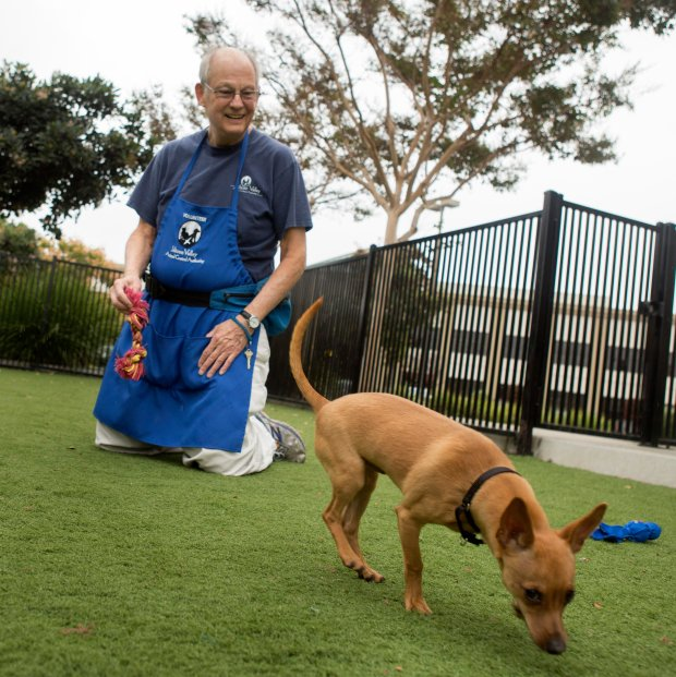 Volunteer Peter Ross, 76, plays with 'Nemo' at the Silicon Valley Animal Control Authority in Santa Clara, Calif., Thursday, Oct. 27, 2016. Ross loves pets, but he chooses not to have one of his own for a number of reasons. To fulfill his desire to be around animals, Ross volunteers as a dog walker for the SVACA and for other folks. (Patrick Tehan/Bay Area News Group)