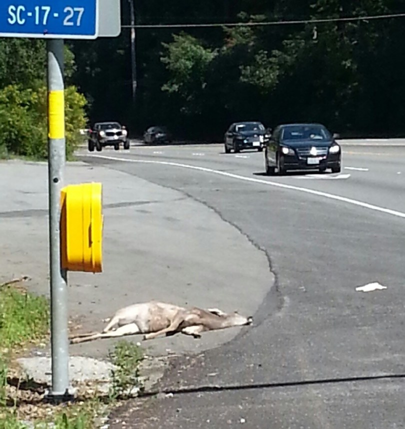 Deer are frequently hit by vehicles on Highway 17 through the Santa Cruz Mountains, particularly during the autumn mating season. Every year, roughly 200 people are killed in as many as 2 million wildlife-vehicle collisions at a cost of more than $8 billion, according to the Western Transportation Institute.