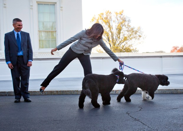 FILE - In this Nov. 27, 2015, file photo, first lady Michelle Obama is pulled away by her dogs Bo and Sunny, after welcoming the Official White House Christmas Tree to the White House in Washington. It's hardly a dog's life of just eating and sleeping for President Barack Obama's pets Bo and Sunny. The Portuguese water dogs are popular canine ambassadors for the White House. They've become so in demand that they have schedules, like the president. (AP Photo/Pablo Martinez Monsivais, File)