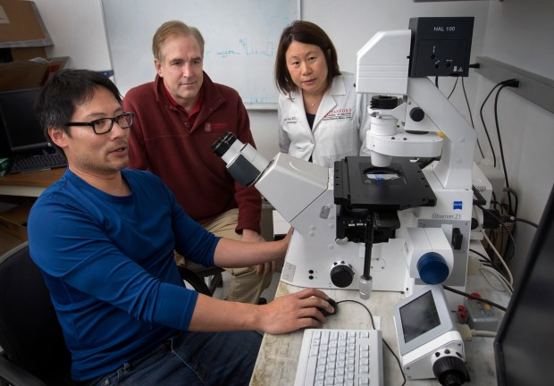 From left, researcher Ngon Nguyen, Dr. Peter Marinkovich and Dr. Jean Tang look at a microscopic image of a tissue sample at the Center for Clinical Sciences Research, Stanford University in Stanford, Calif., Friday, Feb. 3, 2017. Stanford scientists are using gene therapy to treat a devastating disease that causes skin to be so fragile that it can flake off at the slightest touch. Cells from patients' skin are removed, genetically modified, grown into iPhone-sized sheets and reattached, healing injury. (Patrick Tehan/Bay Area News) Group)