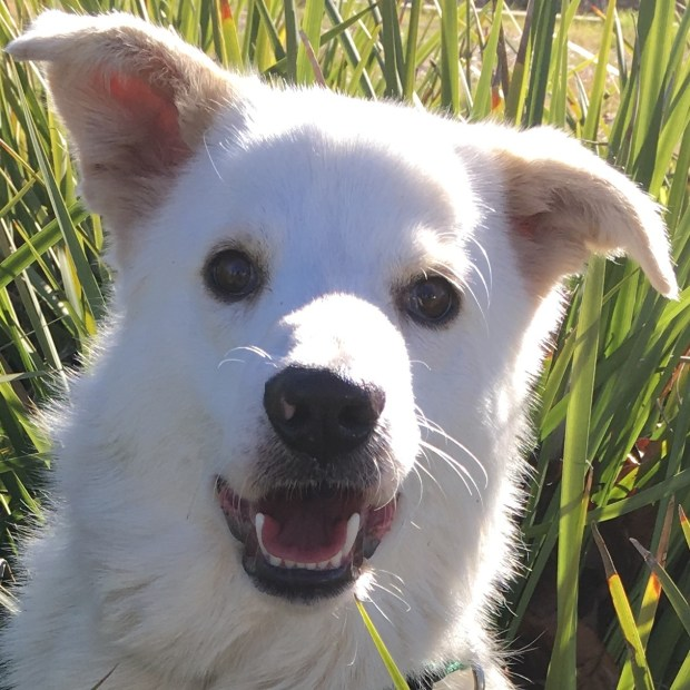 Valley Humane SocietyOprah is the Valley Humane Society's pet of the week.
