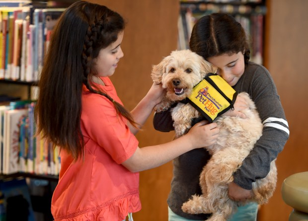 Piper from the Pet Hug Pack of Tony La Russa's ARF, receives a lot of love and attention from Amelia Bowes, 10, left, and her sister Allson Bowes, 10, both of Danville, at the Lafayette Library in Lafayette, Calif., on Sunday, March 19, 2017. Piper, works with owner Jan Monteyne, of Moraga, as an ARF volunteer and was on hand for a photo shoot with the girls older sister Audrey earlier with pet photographer Barbara Brady-Smith before having a break with the twin-sisters. Piper, a miniature Australian Labradoodle therapy pet, also visits patients at John Muir Hospital and works with hospice when his is not performing agility dog tricks. (Susan Tripp Pollard/Bay Area News Group)