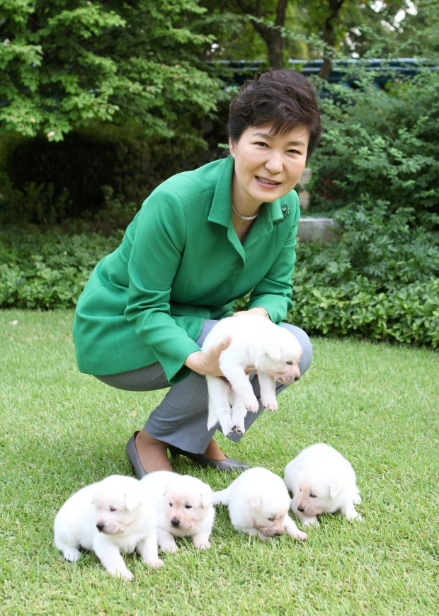 Then South Korean President Park Geun-hye is seen with dogs at the presidential Blue House in Seoul, South Korea.  (South Korean Presidential Blue House via AP)